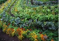 Organic Garden Picture OFRF EQIP Funding