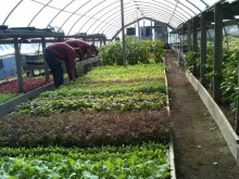 Greenhouse Beginning Farmers