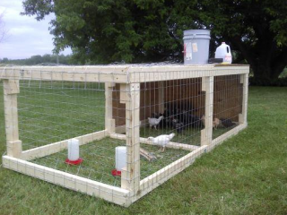 Farm Pictures: Pigs, Chicken Tractor, Guard Dog, Taro | Beginning