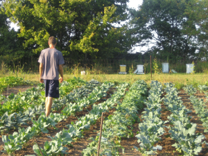Community Farm Madison Wisconsin Equinox