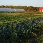 Wisconsin Community Farm - Blue Moon