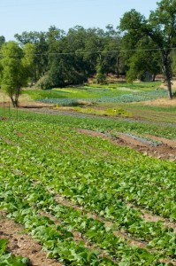 Organic Farm Picture California