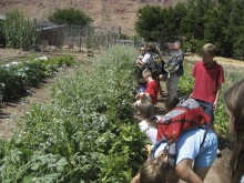 Youth Garden Project in Moab Utah