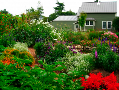 Permaculture Garden Picture