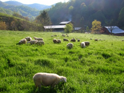 Sustainable Sheep Farm
