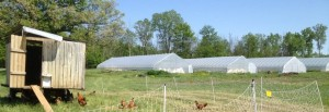 Hoophouse Picture on Michigan Farm
