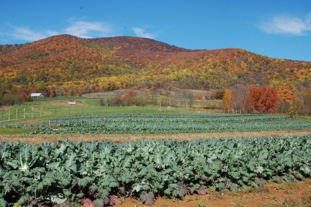 Beautiful Virginia Farm