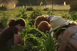 growing food for the community