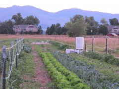 Small Colorado Farm