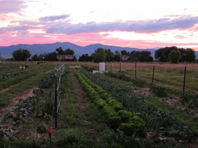Colorado Farm Incubator