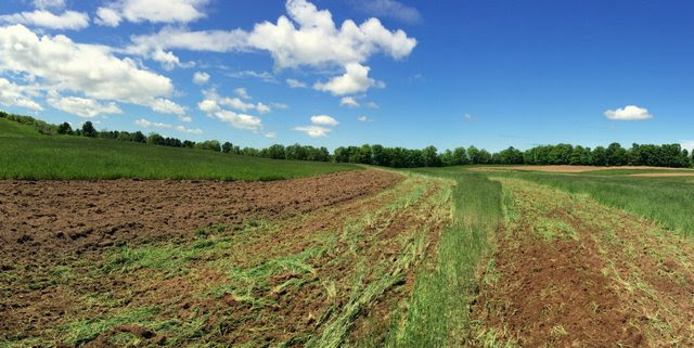Plowing in a green manure crop