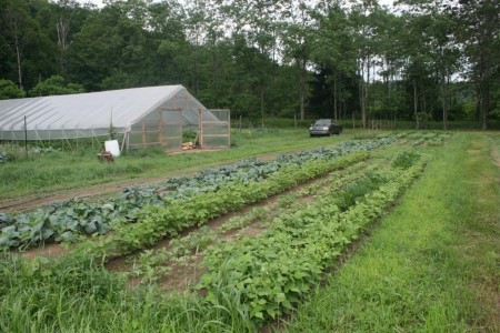 Organic Farm and Greenhouse