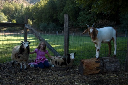 Child Fence Goat