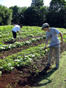 Weeding Vegetables