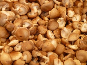 Mushroom Production Resources | Beginning Farmers
