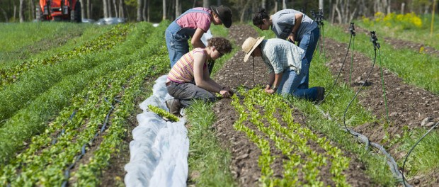 Beginning and Socially Disadvantaged Farmers
