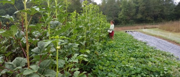Sustainable Crop and Livestock Farm