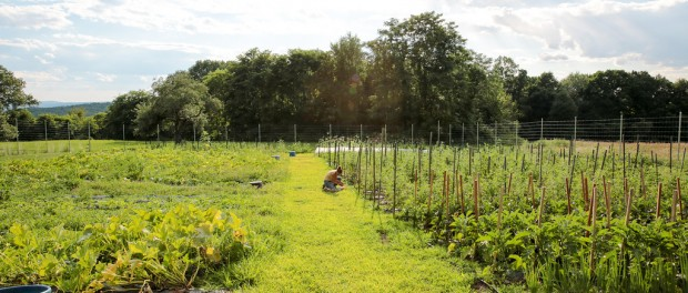 Vegetable Grower Job in the Hudson Valley