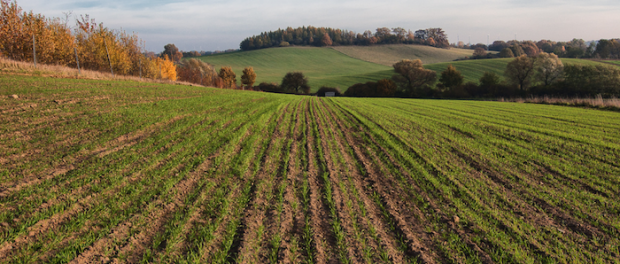 Funding Available for Organic Farming Research