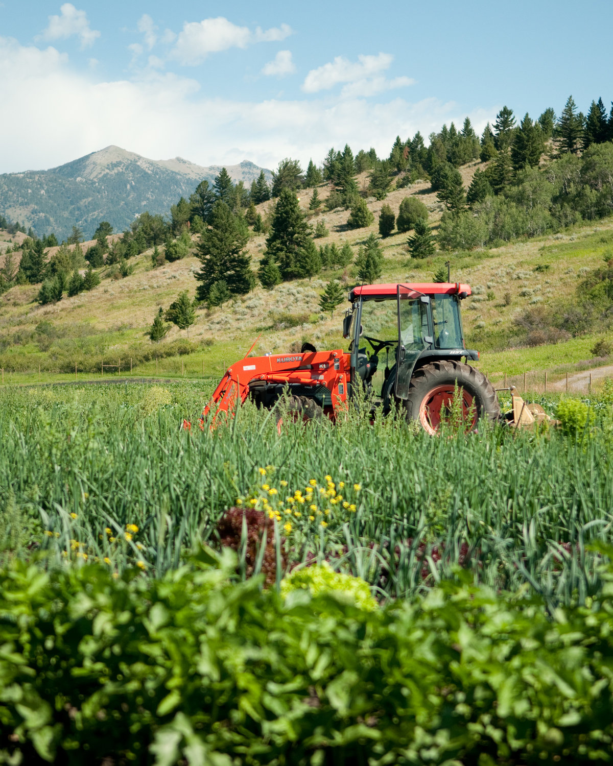 Farming Internships In Montana