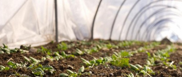 Season Extension with High Tunnels