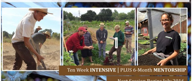 permaculture skills