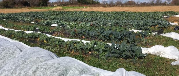 Your Chef's Table Farm