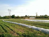 Organic Farm Internships in Michigan
