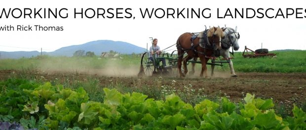 working horses and cattle
