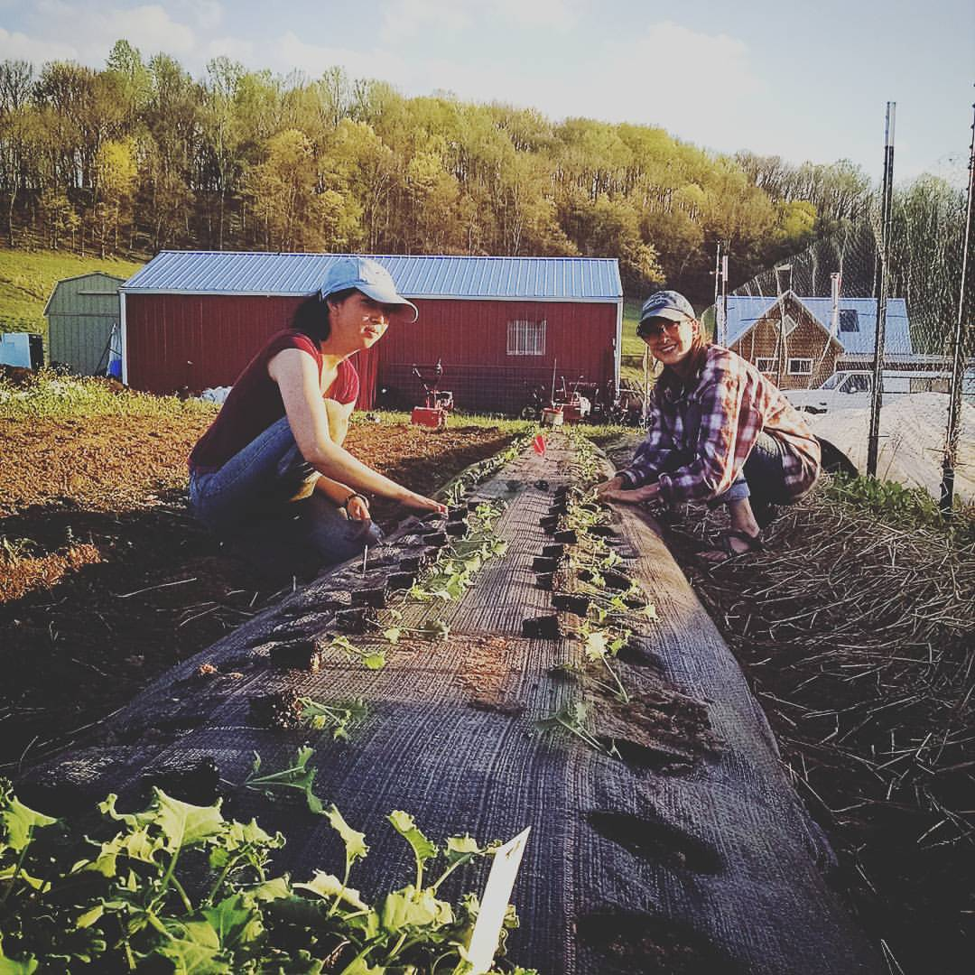 Athena's Harvest Farm Internship - Tennessee