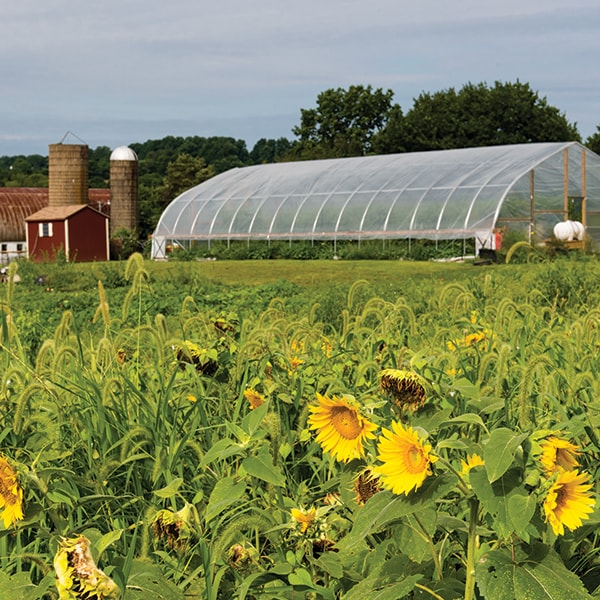 Small Farm Incubator Program In Virginia