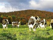 dairy internship in vermont