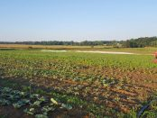 certified organic vegetable farm