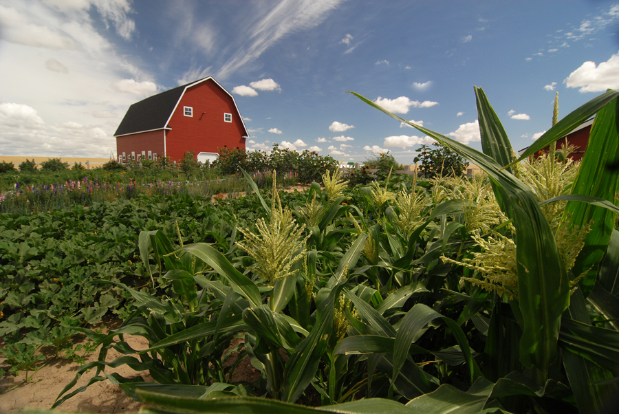 crop insurance for organic farmers