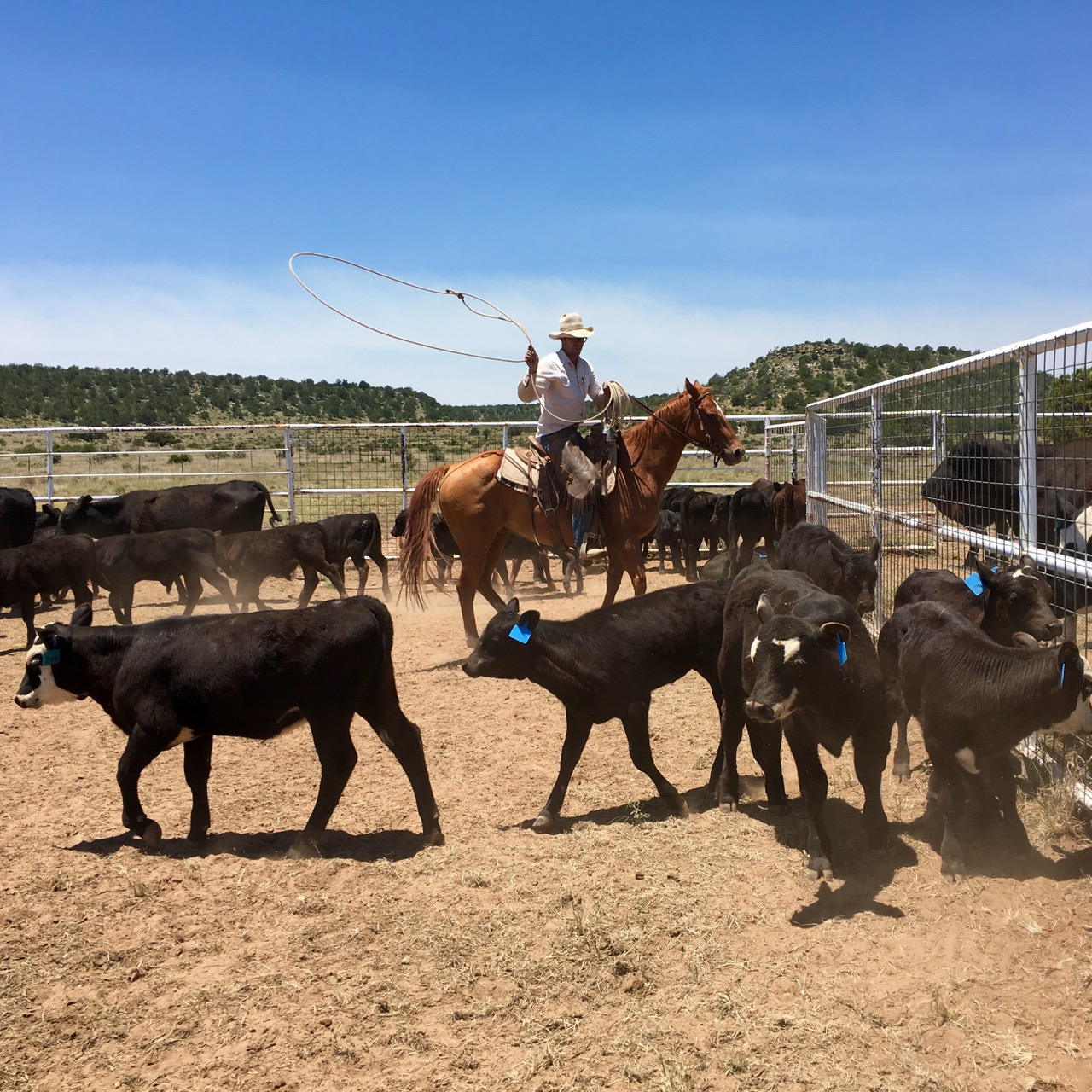 paid farming and ranching apprenticeships