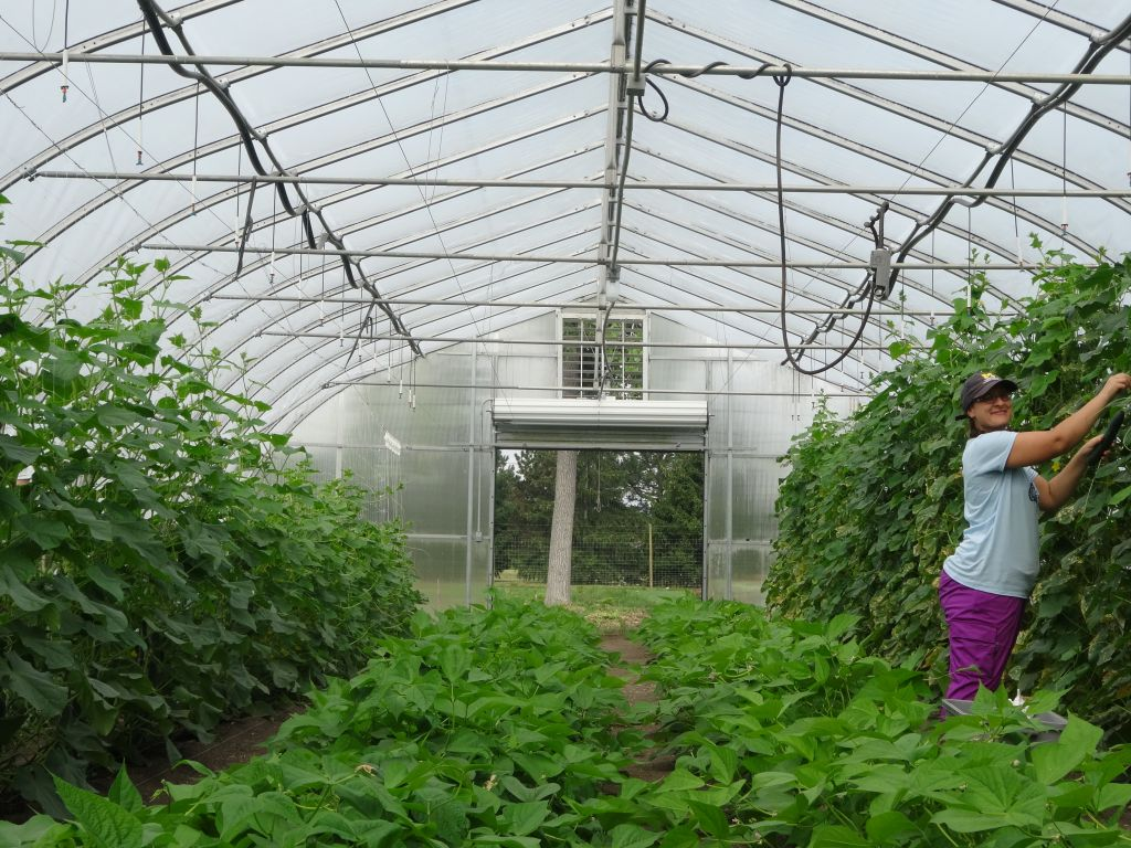agriculture and community health internship