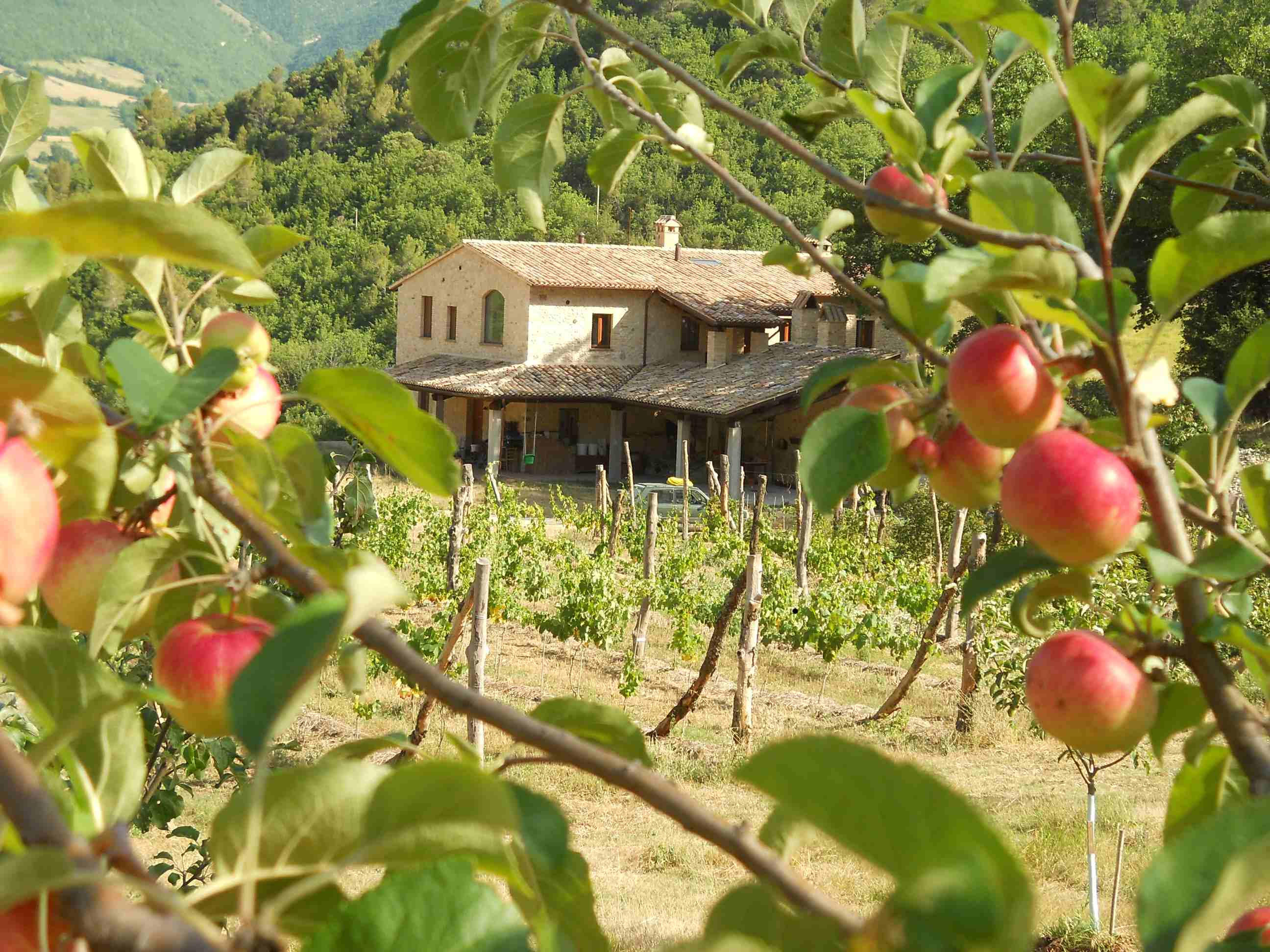 farm internships in italy