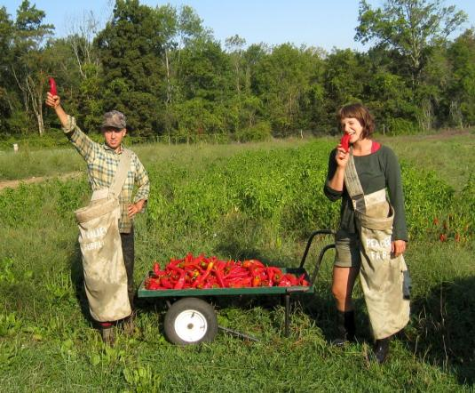 vegetable production apprenticeships