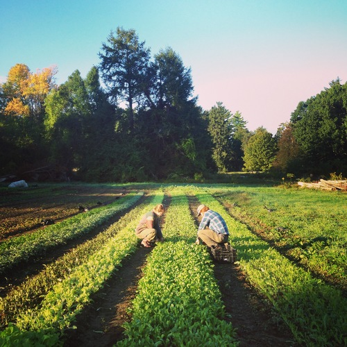 field crew and farm stand