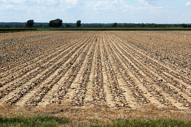 climate change and the agriculture sector