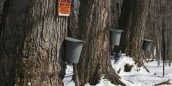 Introduction to Maple Syrup Production