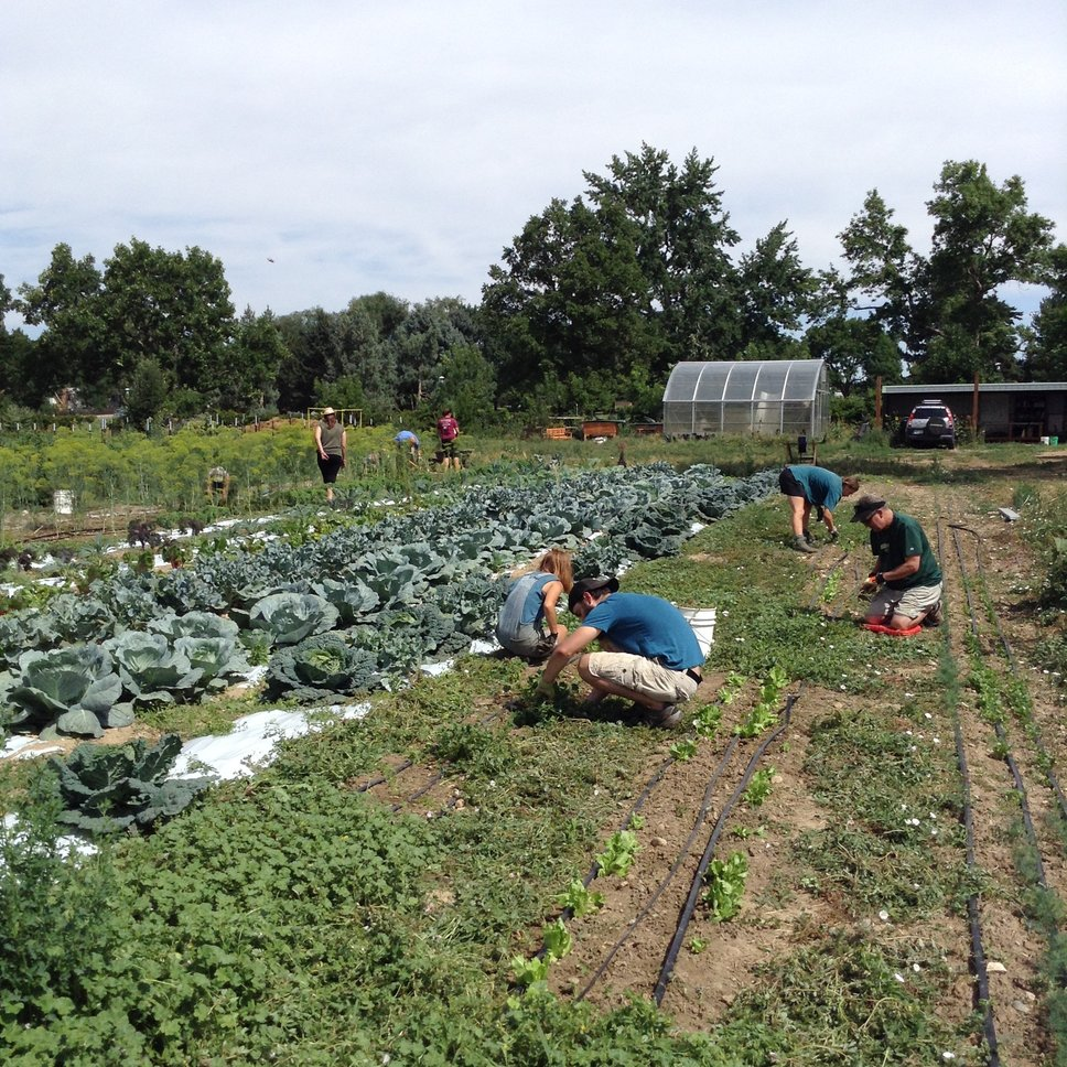 Farm Internship At Growing Gardens In Colorado